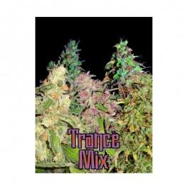 Shaman Trance Mix Auto x10