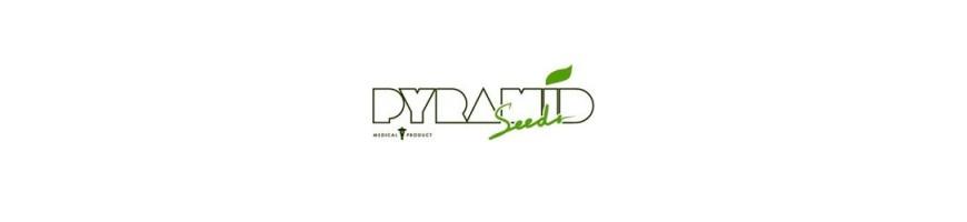 Pyramid Seeds Fem